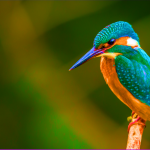 Biomimicry in UX: learning design from nature